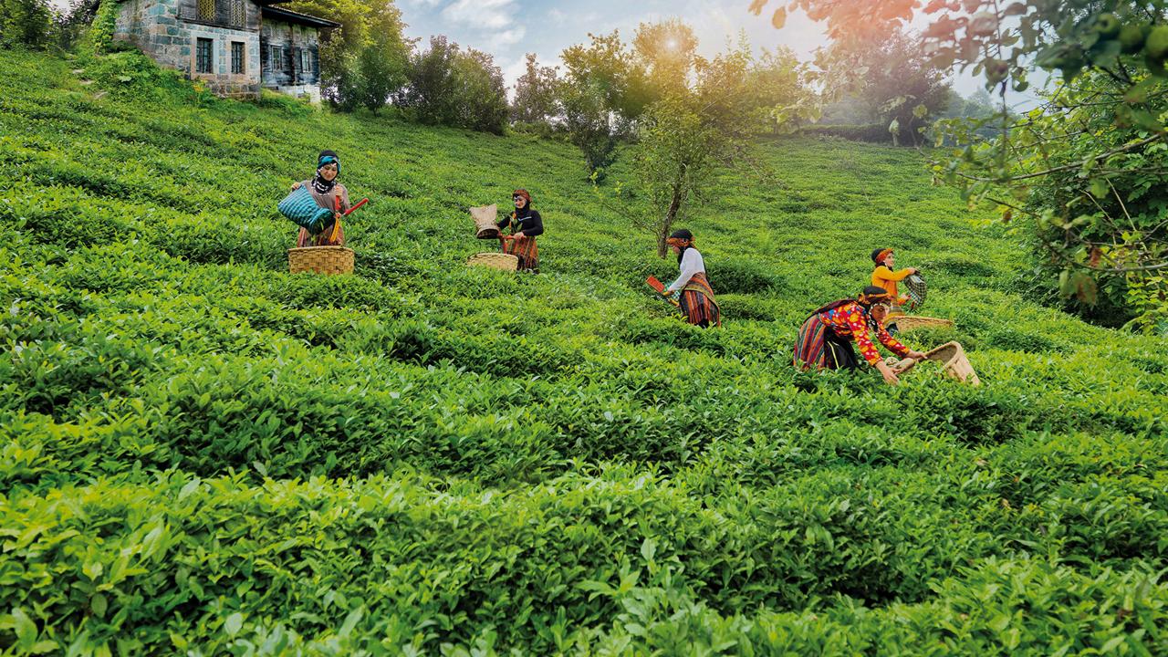 Her Dem Toprak İçin projesiyle çayda verim yüzde 38 arttı