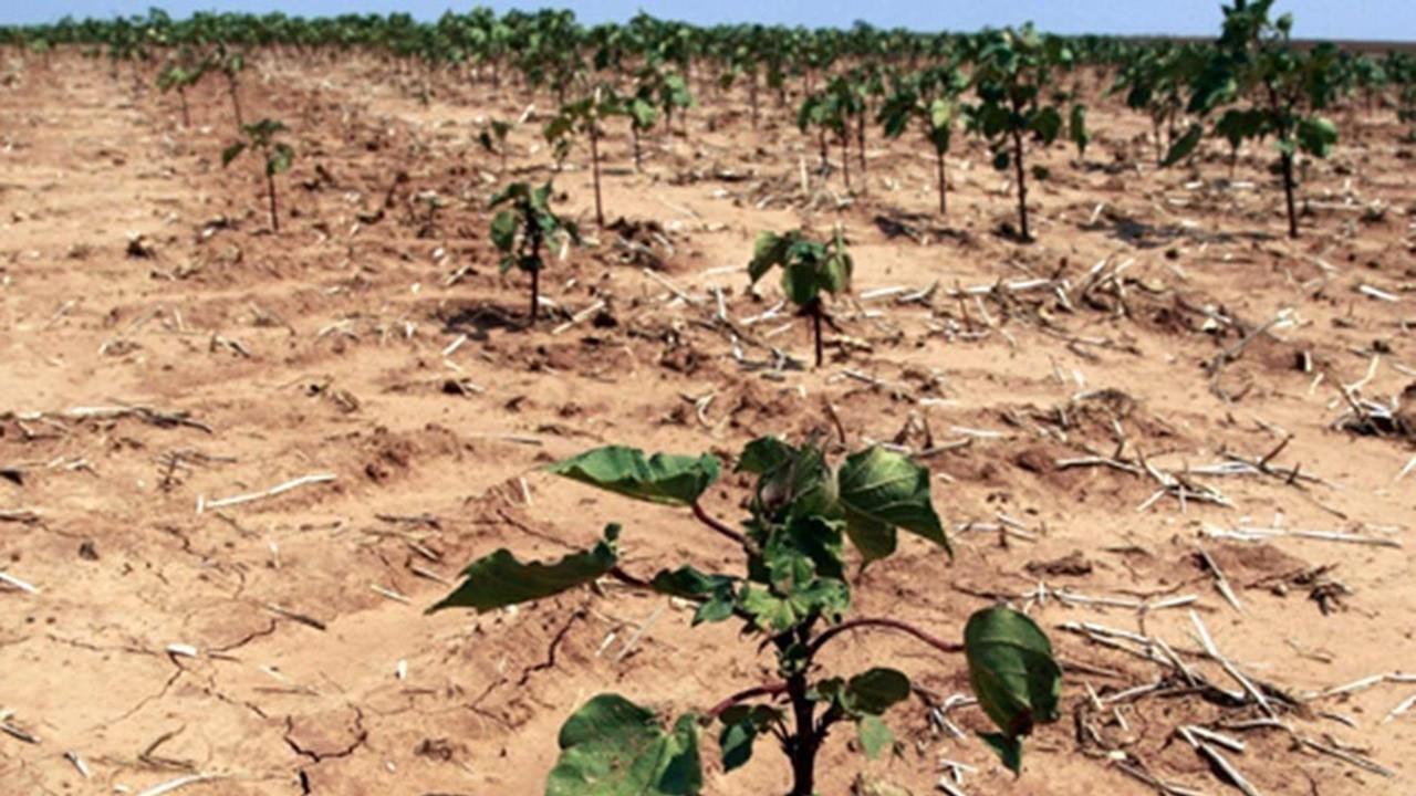 TARSİM'den üreticiye 214 milyon liralık kuraklık ödemesi