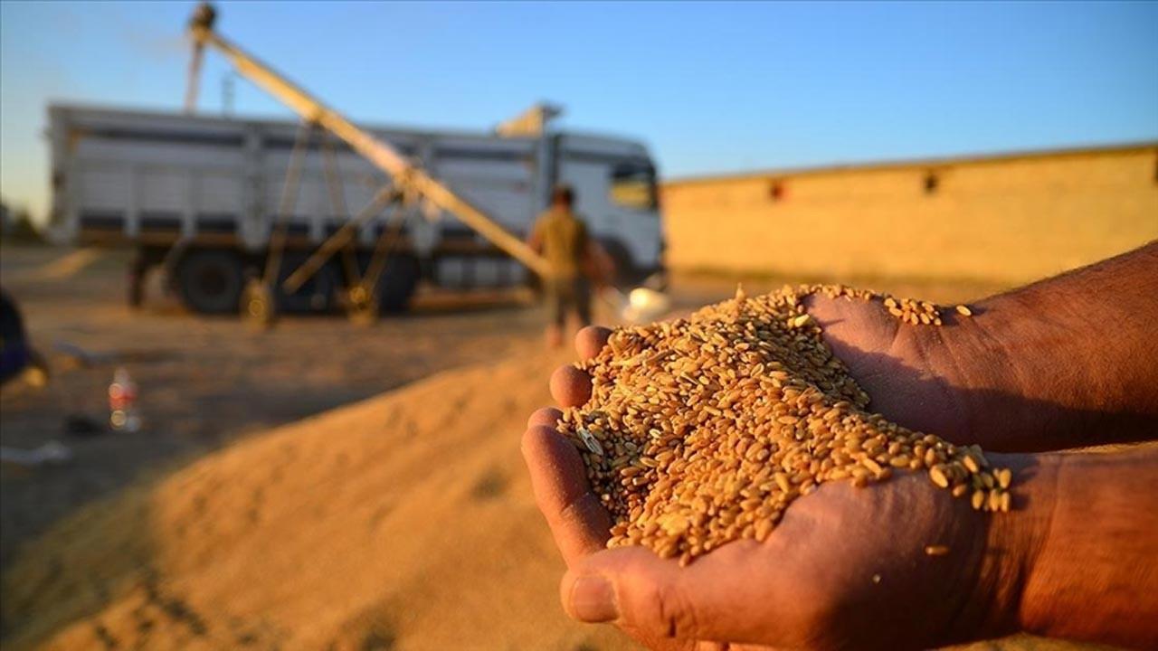 TMO, 800 bin ton hububatı satışa açtı